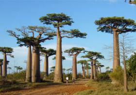 Madagaskar meer dan een tekenfilm