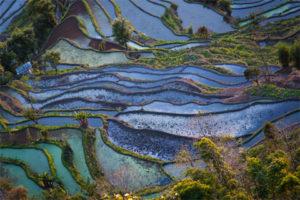rijstvelden-Thailand