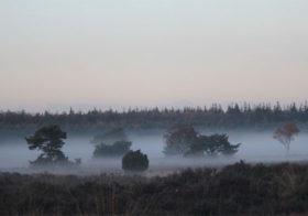 Ontdek de Veluwe, een van de mooiste natuurgebieden van Nederland