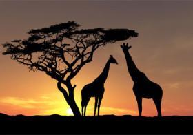 Zuid-Afrika op wel 7 verschillende manieren